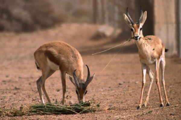 shaumari-wildlife-reserve